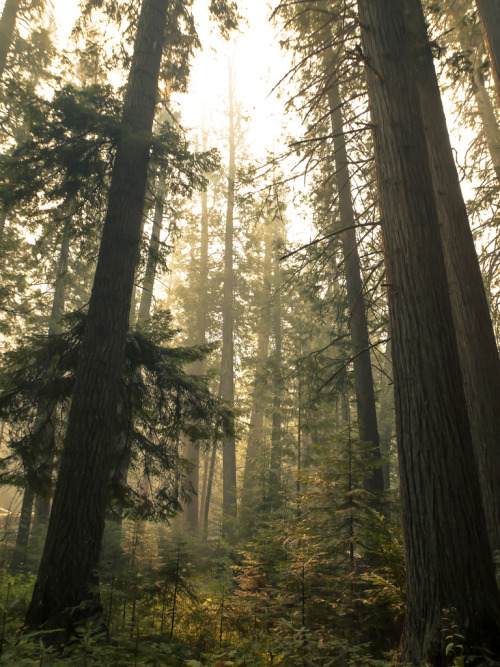 just-breezy:  Devoto Grove- Near the Loscha River in Northern Idah | Brian Johnson