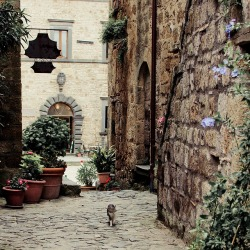 | ♕ |  a cat in Civita di Bagnoregio  | by ©.natasha. | via ysvoice