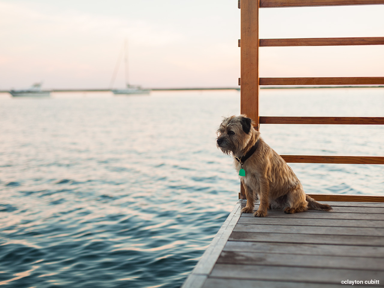 Touzie the houseboat guard dog, Provincetown   (6471)