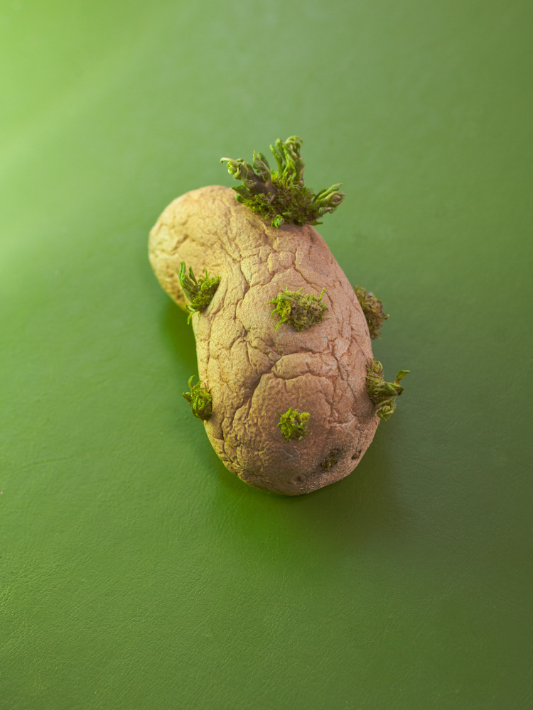 damienmaloney:  potato - damien maloney 2012