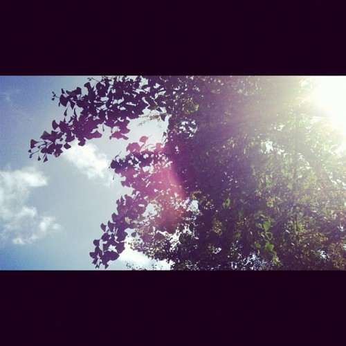 Sky of today #sky #today #green #uni #moment #sunshine (Taken with Instagram)