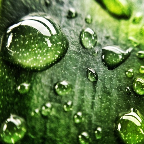 Water beads #olloclip #macro #macrogardener  (Taken with Instagram)