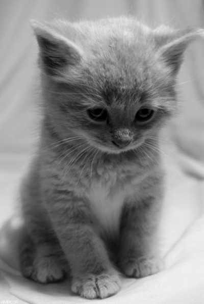naturallybrunette:  i want this kitten SO BAD