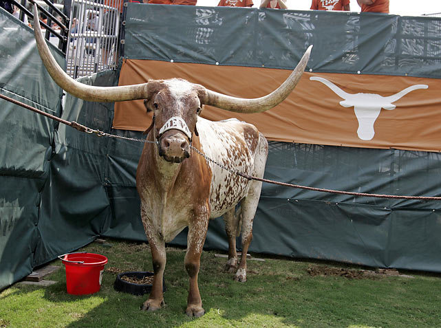 Bevo, the mascot of the Texas Longhorns, hangs out during a 2009 game. Check out the gallery below for a collection of the NCAA's top real animal mascots. (James Smith/Icon SMI) GALLERY: The NCAA's Top Real Animal Mascots