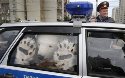 "shortformblog:  Best Greenpeace protest photo you'll see today: ""A Greenpeace activist, dressed as a polar bear, sits inside a police car after being detained outside Gazprom's headquarters in Moscow, Russia, on Sept. 5, 2012. Russian and international environmentalists are protesting against Gazprom's plans to pioneer oil drilling in the Arctic."" (photo by Misha Japaridze/AP; ht @breaking)"