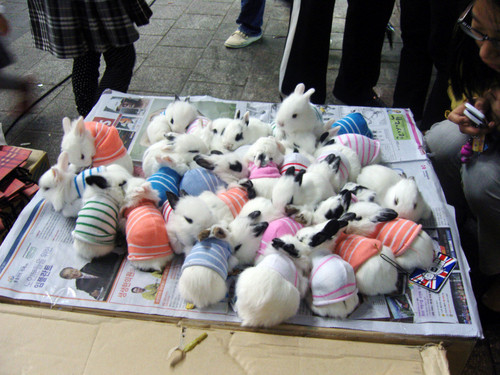 overlyenthusiastic:  Baby Bunnies in Sweaters! (What more could you want? I mean seriously people…)