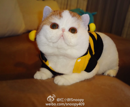 cybergata:  To BEE or not to BEE!  Snoopy say I are BEE!