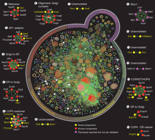 """Interaction landscape of membrane-protein complexes in Saccharomyces cerevisiae"""