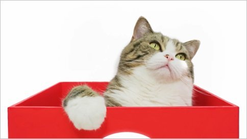 Maru, the Internet's Top Cat, Goes to Work for Uniqlo. This might be the most excited i've ever been for work we've done at Digitas. Click picture for complete story.