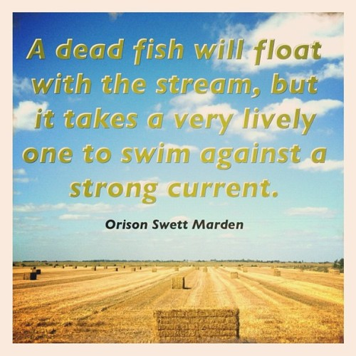 A dead fish will float with the stream, but it takes a very lively one to swim against a strong current. - Orison Swett Marden #quote #words (Taken with Instagram)