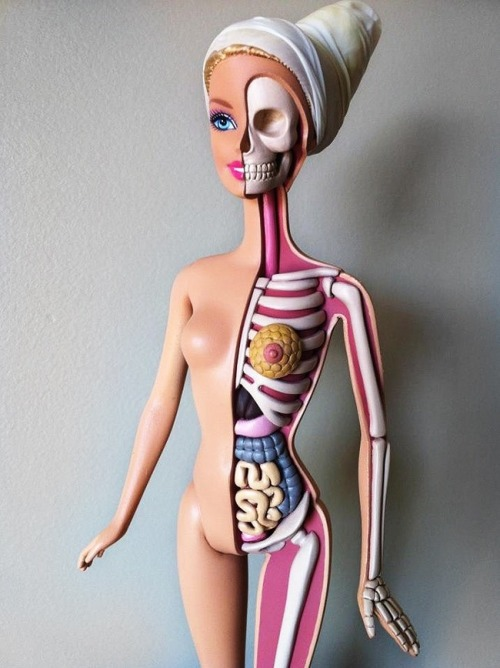 cosascool:  Anatomy of Barbie by Jason Freeny