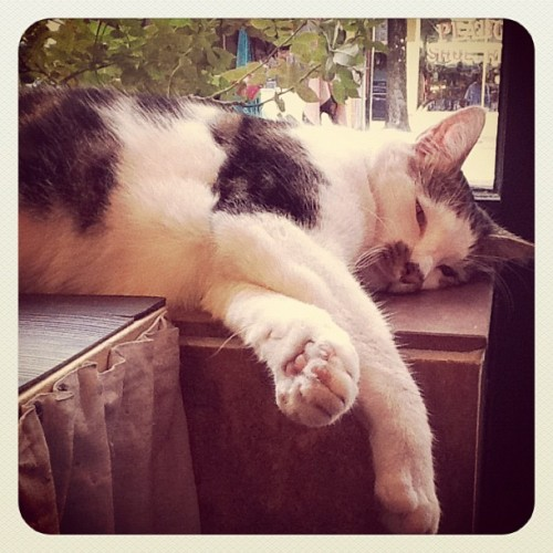#cat #kitty #cute #sleepy (Taken with Instagram)
