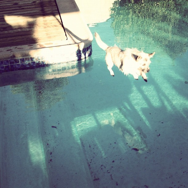 #dog #puppy #air #pool #sun #life #love #live #wiwt #instanmood #igerssf #sky #wood #water #kiwi #summer  (Taken with Instagram)