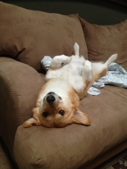 corgiaddict:  Hi Mom!  This is my fav spot :)
