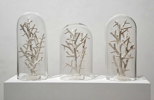 Mark Dion, Bone coral (phantom museum) (2011)