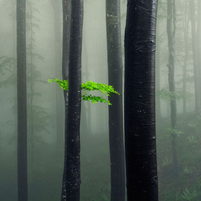 archenland:  Bit of Green (by Evgeni Dinev)