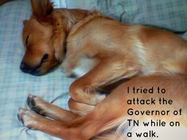 dogshaming:  Bad Coco. Editor's Note: It's okay, he's a republican!
