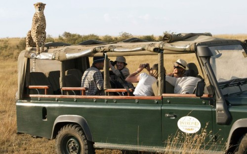 theanimalblog:  A tour group got the shock of their lives when a cheetah climbed on top of their Land Rover, while on safari in the Masai Mara, southwest Kenya. Once the tourists had gotten over the initial shock of a large, wild cat sat above them with only a thin sheet of canvas for protection, they began to take photographs, knowing this was likely to be the closest they would ever get to a cheetah. Picture: Ed Brown/Rex Features
