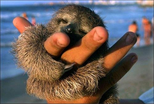 sloths + hugs hehe. (via Flickr: iamrandygirl)