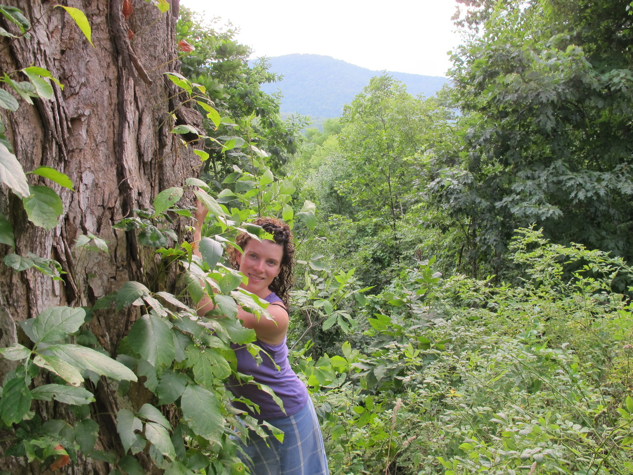 "TREE INTERVIEW WITH IRIS CUSHING               location: Mount Tremper Arts   Do you ever think about trees?  Yes. I think about them, and with them, and because of them. There's a Sappho fragment, translated by Anne Carson: ""Eros shook my mind/like a mountain wind falling on oak trees."" it's like that for me too. My mind, beyond its thinking: erotic, shaking.   What is a vivid/significant memory you have involving a tree or trees?   I'm having one right now—breathing. Cottonwoods, ponderosa pines, eucalyptus, junipers and oaks.    Are trees involved at all in your writing or worldview?  Yes. The term ""knock on wood"" dates back to pagan times: in Scandanavia, folks believed that there were mischievious spirits that lived inside the trees, who liked to meddle with people's business. So when they were saying aloud something they wanted, they'd knock on the nearest tree so that the spirit in the tree literally couldn't hear what they were saying. In my poems, I would like to do the opposite of knocking on wood.   —- Iris Marble Cushing was born in Tarzana, CA. In 2011, she was a writer-in-residence at Grand Canyon National Park in Arizona. Her poems have appeared in the Boston Review and other places. She works as an editor for Argos Books and is a writing tutor at Columbia University.   Go Green and Read an Iris Cushing poem: http://www.twoseriousladies.org/three-poems-by-iris-cushing/"