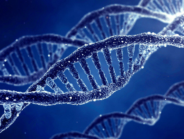 How Genes Work Image credit: Genetic_Engineering/iStockphoto/Thinkstock _____  Huge human gene study includes Penn State University research Hundreds of researchers in the United States, United Kingdom, Spain, Singapore, and Japan performed more than 1,600 sets of experiments on 147 types of tissue with technologies standardized across the consortium. … This is the first integrated understanding of how the human genome functions …the triumphant result of a collaborative five-year project called ENCODE. Read more» _____________________ Interested in genetics and the Life Sciences?