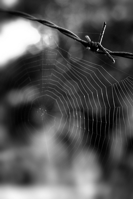 "Web on Flickr.""Convictions are more dangerous enemies of truth than lies."" Friedrich Nietzsche"
