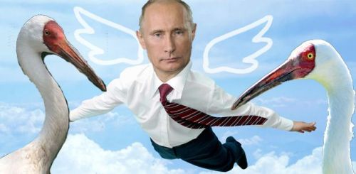 motherjones:  Vladimir Putin Pilots Hang Glider in Attempt to Lead Siberian Crane Migration Not. An. Onion. Headline.