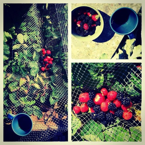 backyard garden (Taken with Instagram)