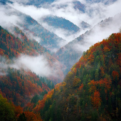 simplyseasons:  more fall pictures here