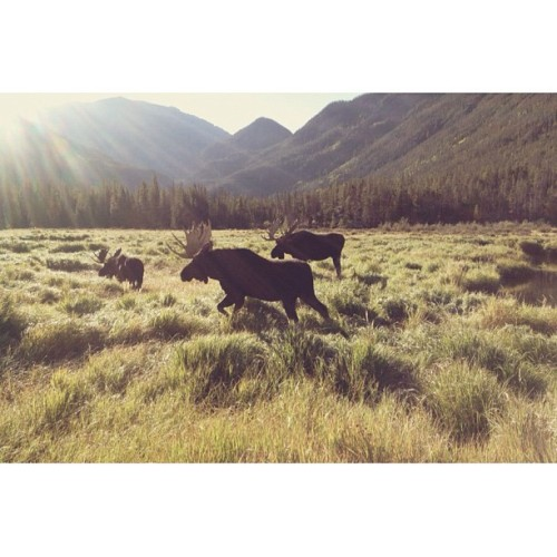 A GMO. Guys morning out (Taken with Instagram at Rocky Mountain National Park)