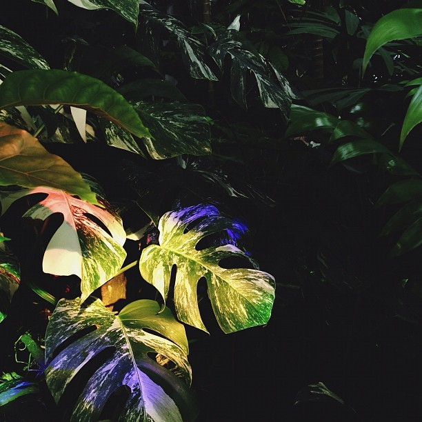 A different rainbow today.  (Taken with Instagram at Conservatory of Flowers)