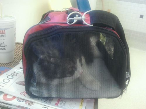 get out of there cat. that carrier was made for someone smaller than you. why did you get in there anyway? can't you do that when we need to go to the vet?