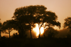 Title: African Morning Sunset on Safari