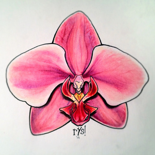 Orchid in color pencil.