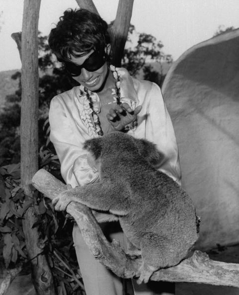 Iconic model Donyale Luna serving major Josephine Baker as she pets a koala bear in a wildlife sanctuary in Australia in 1967. Photo by Time Life Pictures/Pix Inc./Time Life Pictures/Getty Images.