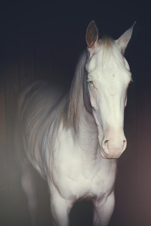 manolescent:  Blue Eyed Horse