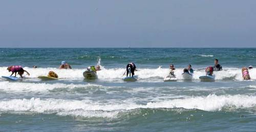 The surfing dogs are attempting to break two world records this weekend! Top Dog Surfers Hit the Waves This Sunday, America's best canine surfers will compete at the  7th Annual Surf Dog Surf-A-Thon, the largest competition of its kind in the United States. these waves are ruff…