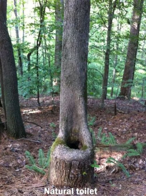 Tree Toilet Some squirrels are in for a nasty surprise.