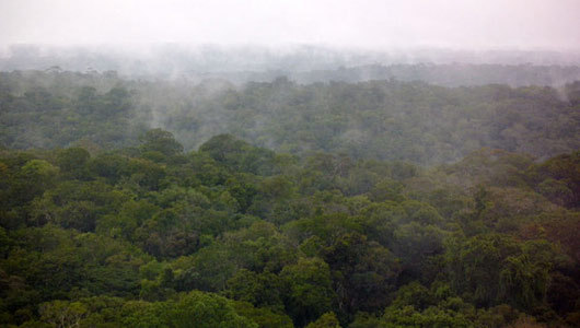 "Amazon Fungi Help Create Clouds, Rain If scientists are correct in their research, the Amazon rain forest might have just been the Amazon forest if not for mushrooms and other fungi. The research, undertaken in an Amazon region with ""pristine"" air—a location where no human pollutants are detectable—has shown that it's the fungi which contribute most to a feedback loop of wet weather. Microscopic, potassium-rich particles released by spore-launching fungi drift up into the atmosphere above the forest, ""seeding"" the sky for rain by providing a surface the water can condense on. This, in turn, supports the fungi and other plants down on the ground. Before you ask, I don't think this will create miniature thunderstorms over your home garden just because you spored the soil with all sorts of 'shrooms. Still, science = good. —MN"