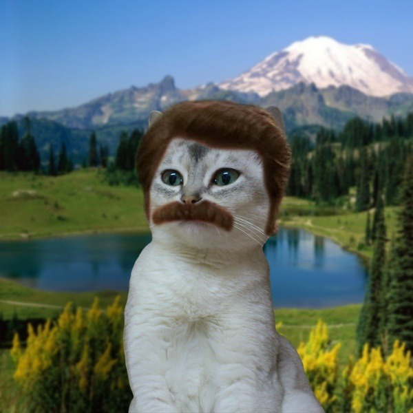 gotsnacksonsnacks:  CAT RON SWANSON …isbetterthanyou  Best thing, ever.