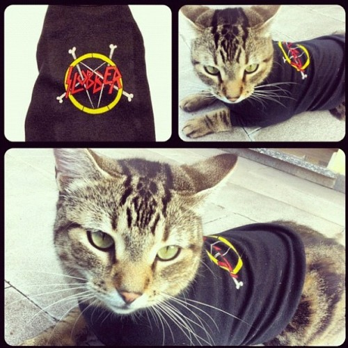 Even Cats love Party Animalz! @zombiegogo 's adorable cat Engine modeling the Slobber tee.