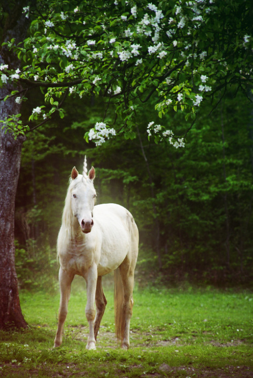 wild-forests:  oh hey, whats my unicorn doing on tumblr?