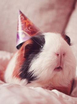 guineapiggies:  B-day card for my friend :3 Submitted by guineapigrage