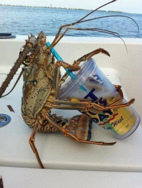 Crustacean Enjoys Thirsty Thursday He doesn't have a problem, bro, he can stop any time he wants.