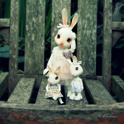 angelicreation:  Bunnies* In Explore by Cakau ♥ on Flickr.
