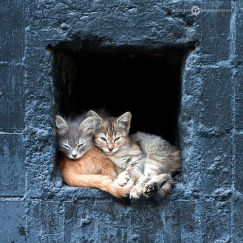 magicalnaturetour:  Photo by Katerina Karmanovskaya ~ Sweet Dreams beautiful friends ♥