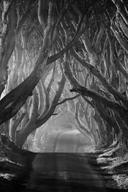 aspirethesenses:  The Dark Hedges (by: Klarens)