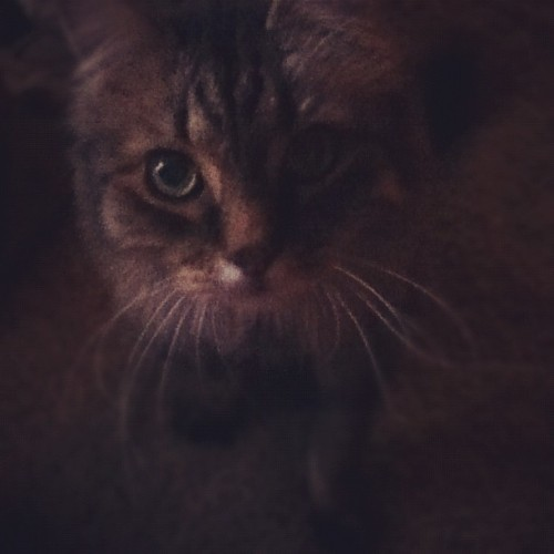 Lord fuzzy pants wants to go too #cat  (Taken with Instagram)