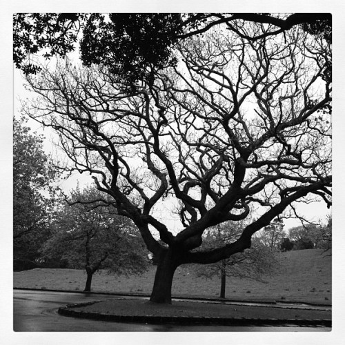 Taken with Instagram at One Tree Hill Domain