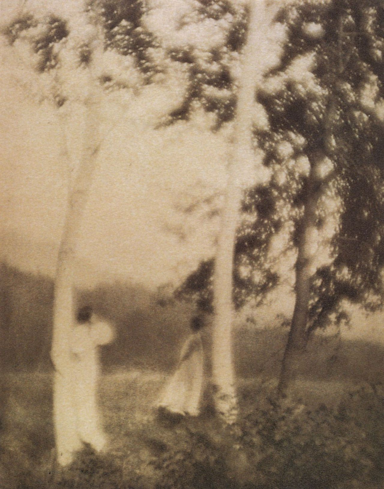 liquidnight:  George H. Seeley White Trees, 1910 Photogravure From Stieglitz: Camera Work